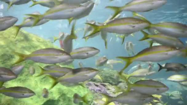 víz alatti képek az állatok és a természet