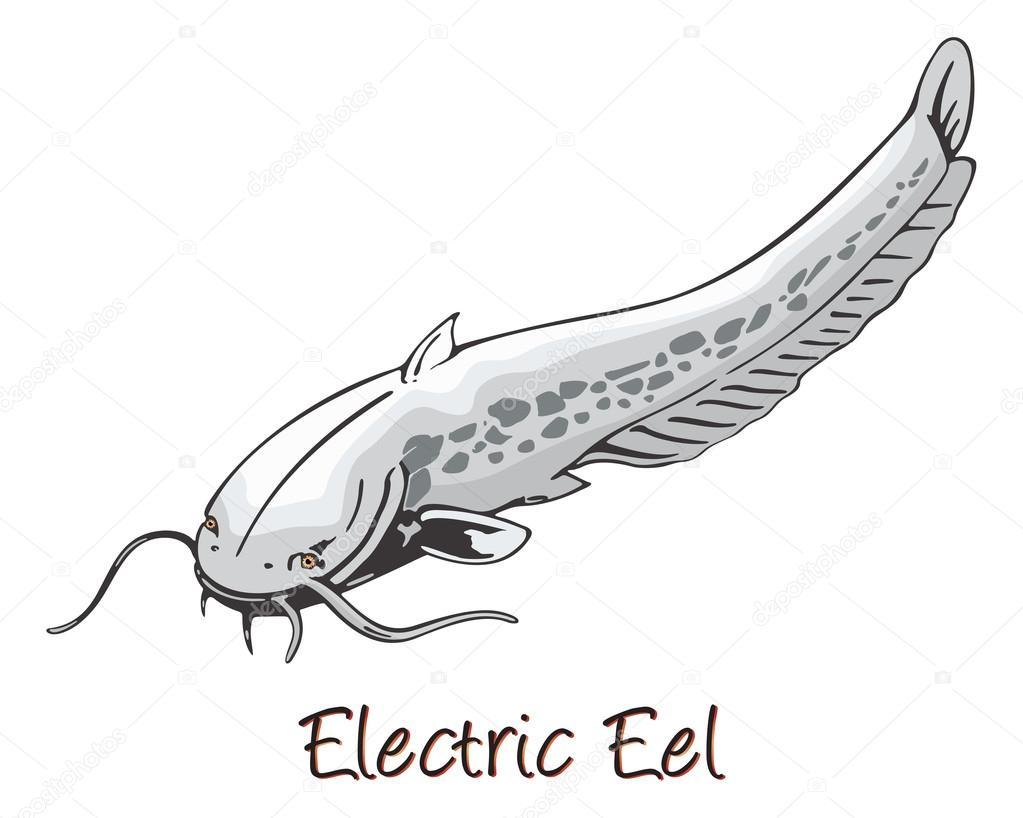Electric Eel Cartoon Images, Stock Photos & Vectors | Shutterstock | 818x1023