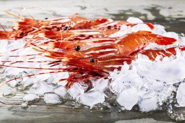 Live Shrimp on Dock