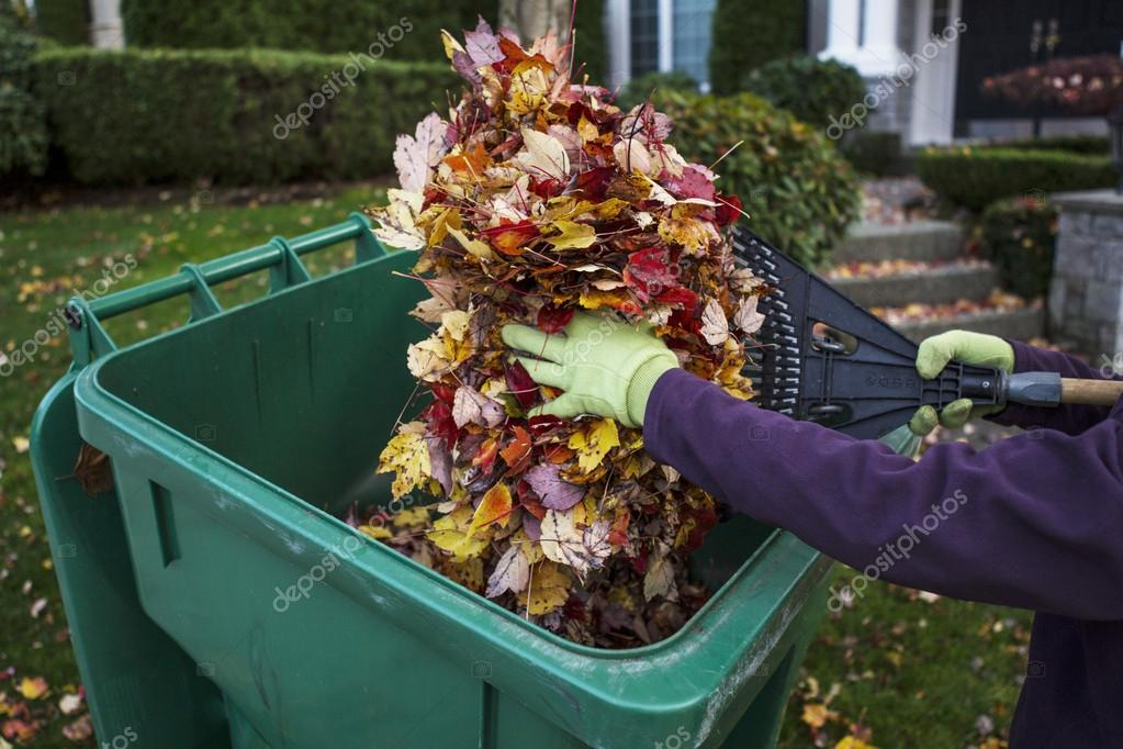 Cleaning Front Yard during Autumn