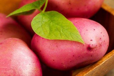 Garden Fresh Red Potatoes in Wooden Bowl