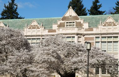 Cherry Trees in Bloom on Campus