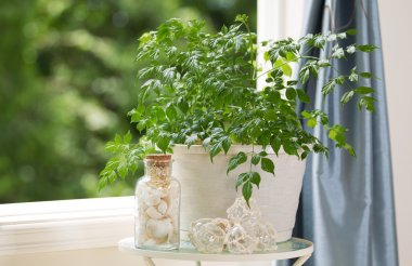 Home Plant and Decorations in front of Open Windows on Nice Day