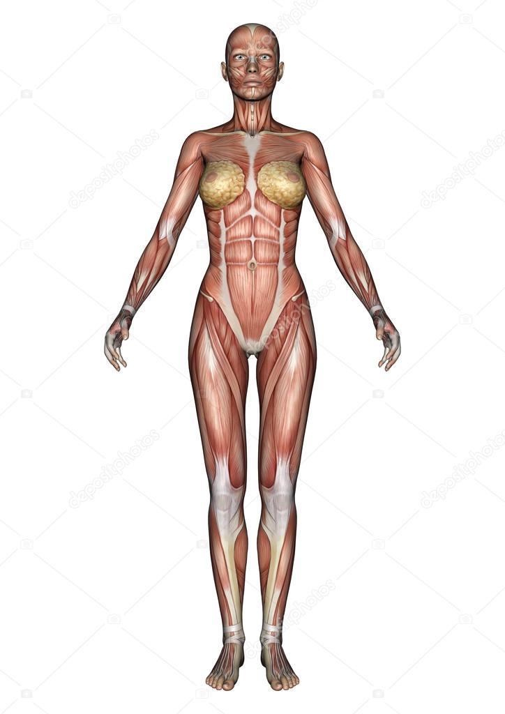 Magnífico Figura Anatomía Femenina Friso - Anatomía de Las ...