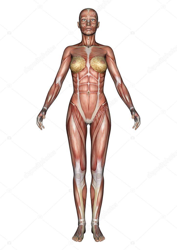 figura de anatomía femenina — Foto de stock © PhotosVac #38213155