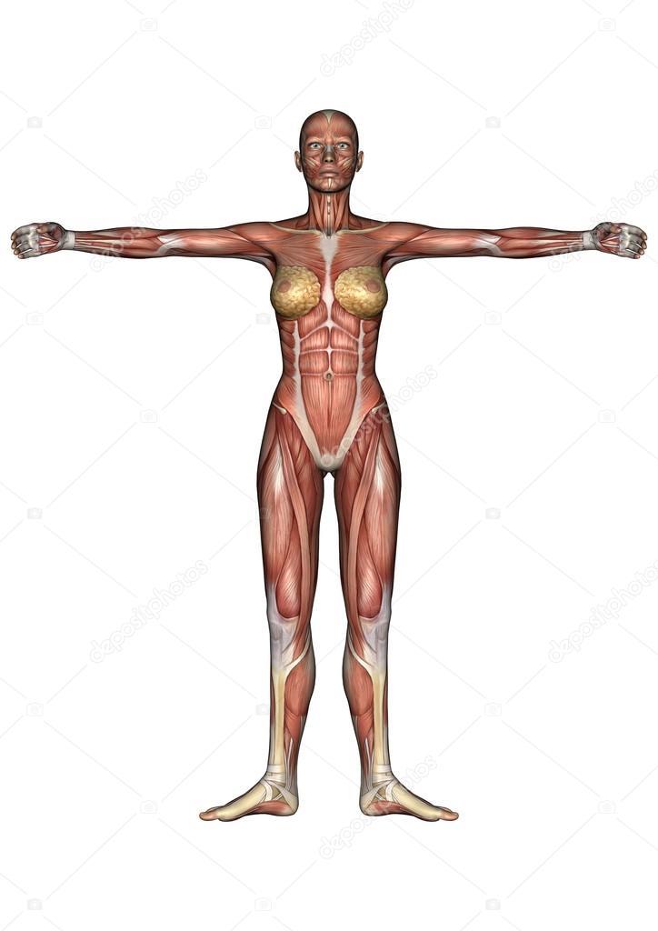 Female Anatomy Figure — Stock Photo © PhotosVac #39393135