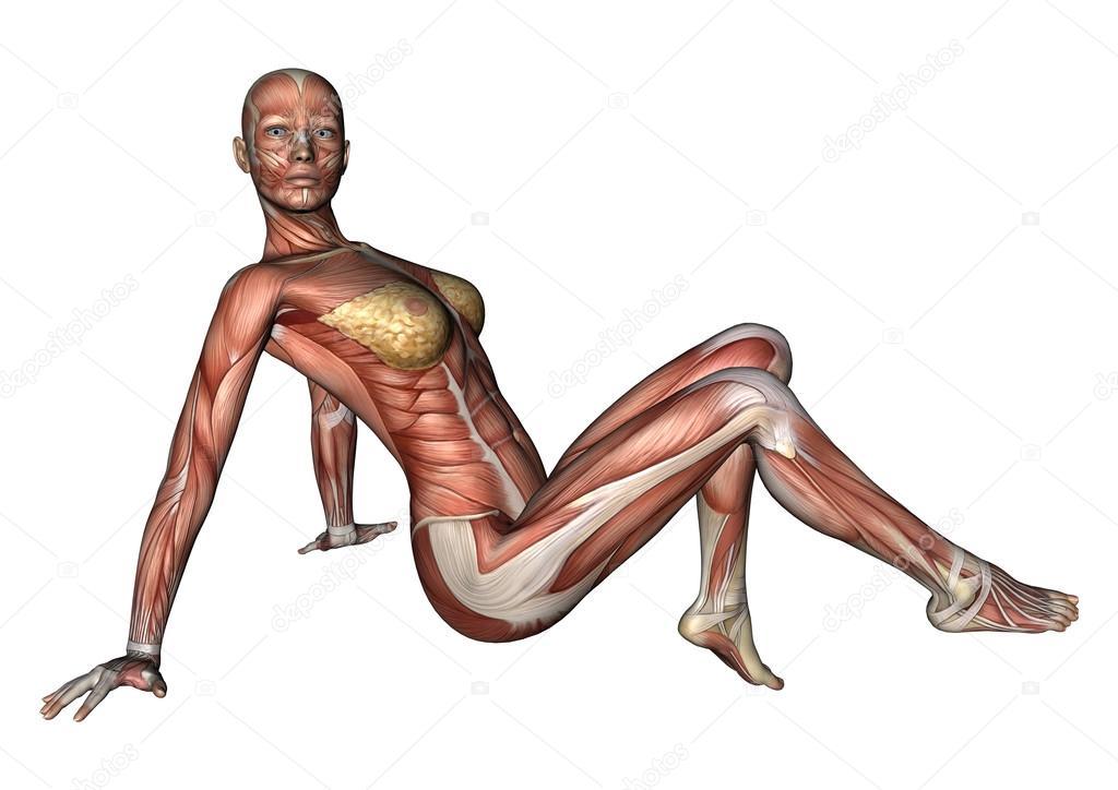 figura de anatomía femenina — Fotos de Stock © PhotosVac #39904929