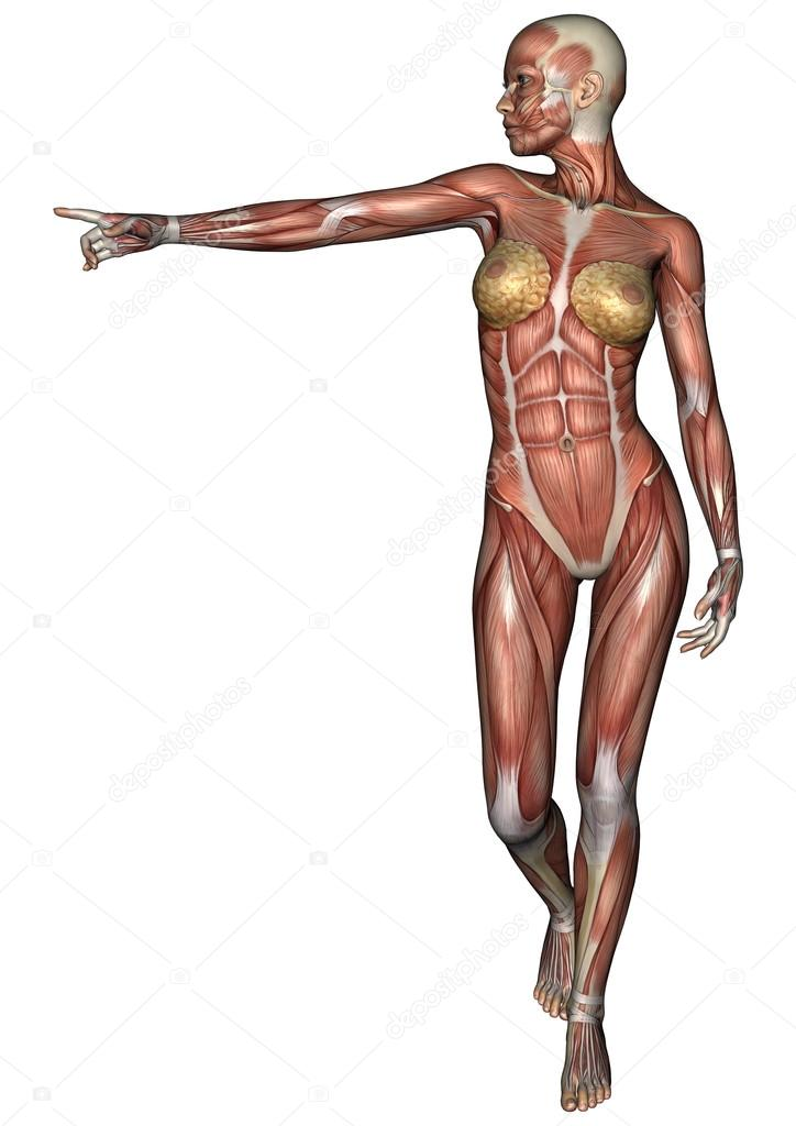 figura de anatomía femenina — Fotos de Stock © PhotosVac #39911107