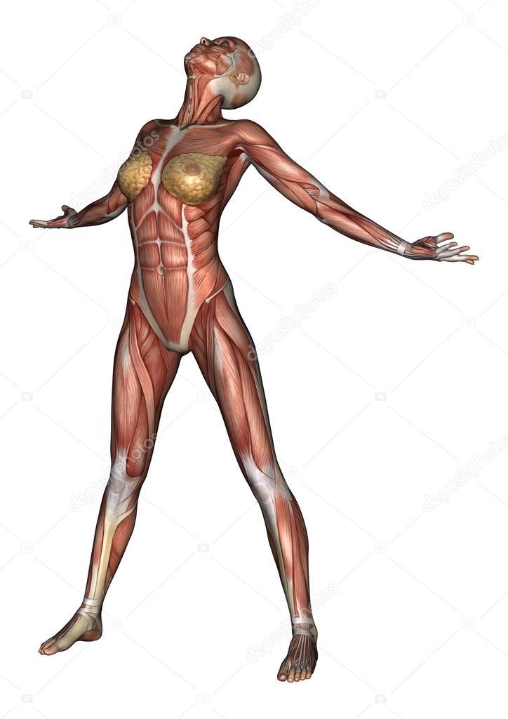 figura de anatomía femenina — Fotos de Stock © PhotosVac #41332611