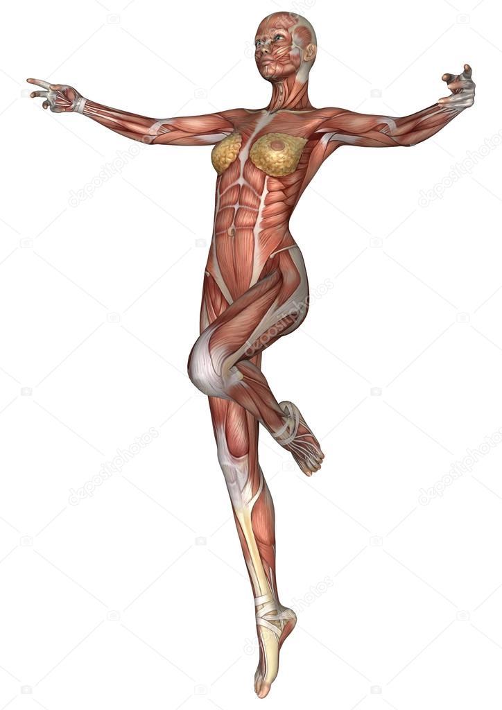 figura de anatomía femenina — Foto de stock © PhotosVac #48145815