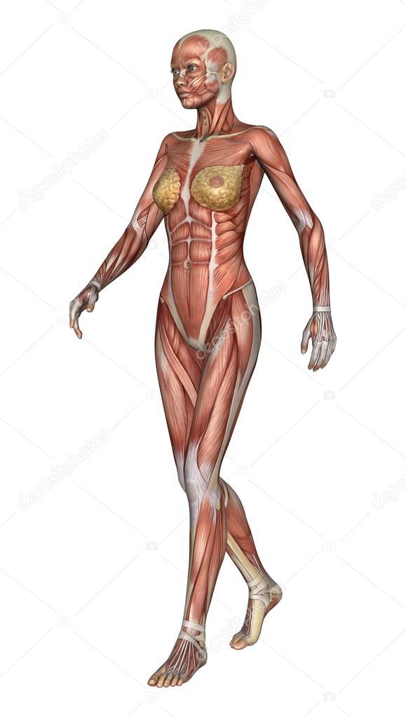 figura de anatomía femenina — Fotos de Stock © PhotosVac #49803433
