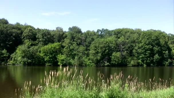 trávy na břehu jezera