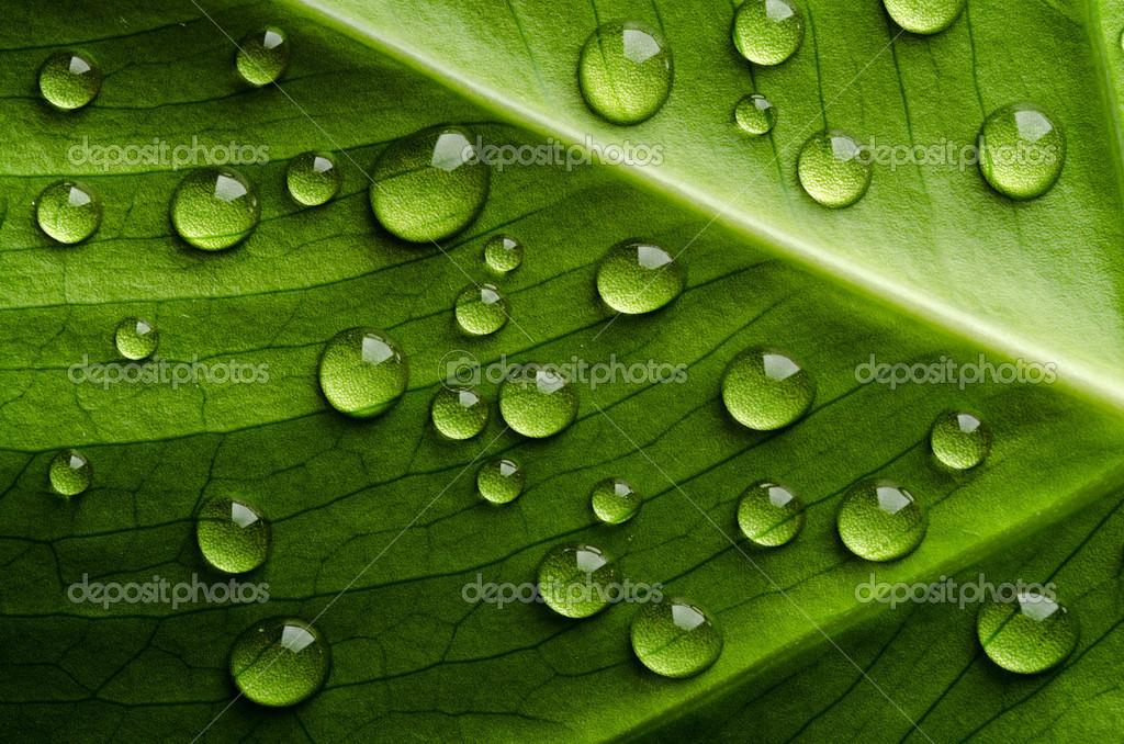 Foglia verde con gocce d 39 acqua foto stock nik merkulov for Finestra con gocce d acqua