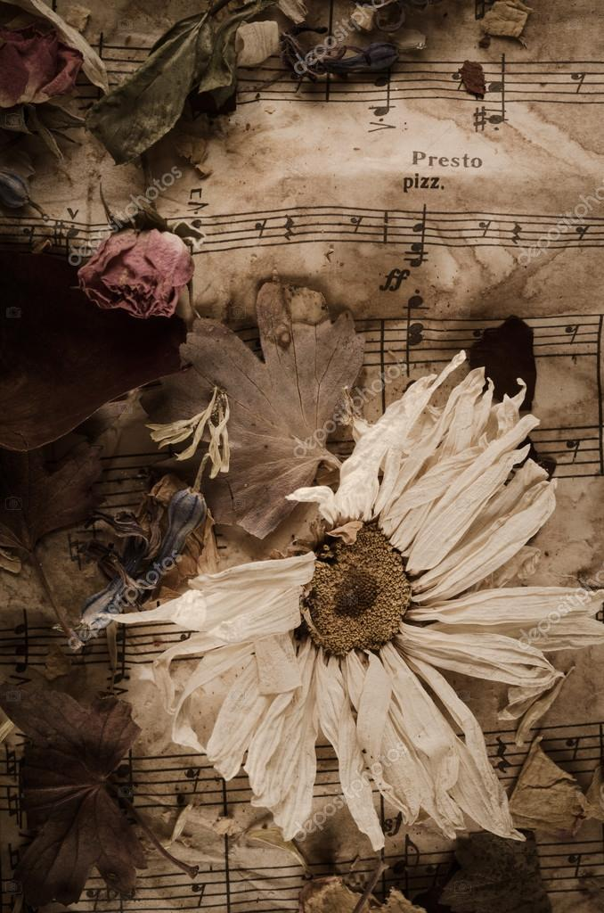 Vintage music notes with dry flowers
