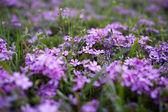Fotografie jarní květiny