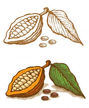 Illustrations of cocoa