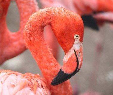 portrait of a flamingo