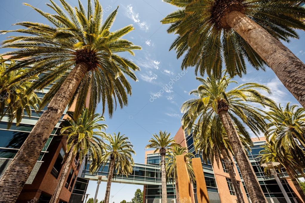 Palms in Silicon Valley