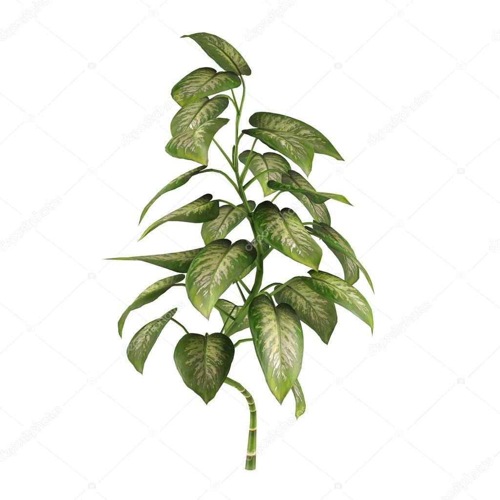 Exotic plant bush tree