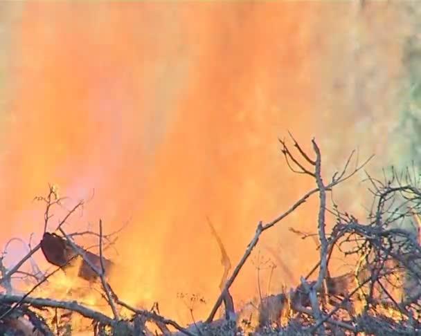požár v lese.