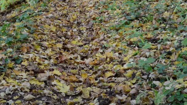 žena hill list podzim