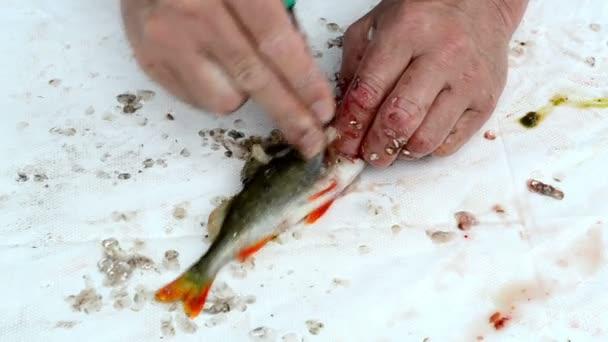 čistá ryba rybář
