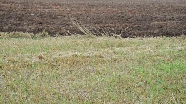 Tractor plough close soil