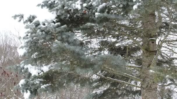 Bird house fir tree snow
