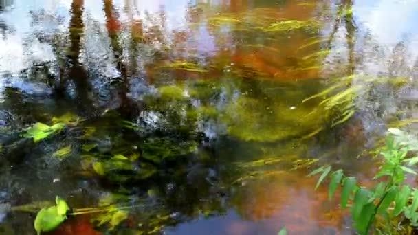 Folyó víz alatti Flóra