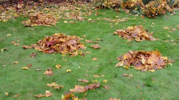 Woman kick leaf pile