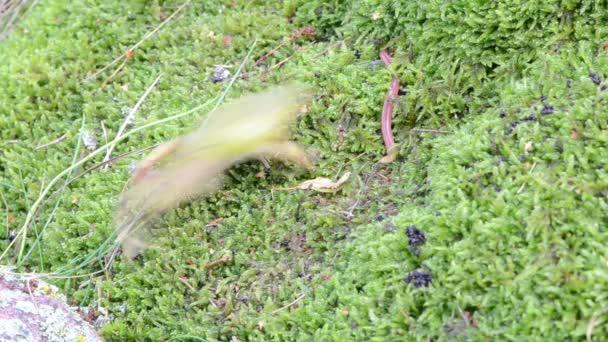 Froschwurmfang