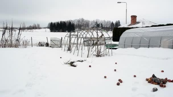Giardino Dinverno In Casa : Giardino d inverno in casa serra fai da te in legno neve mele