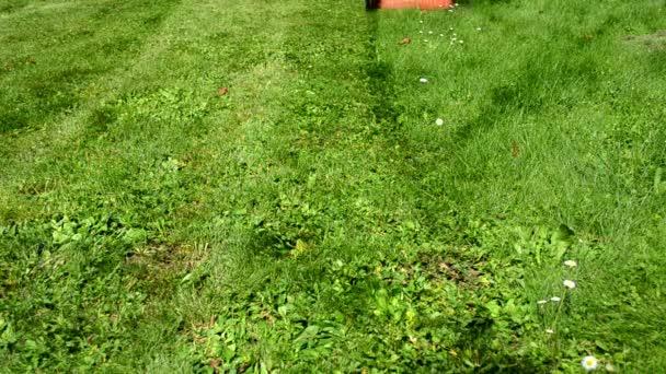 žena dívka sukni flip-flop boty cut Travní sekačky v zahradě