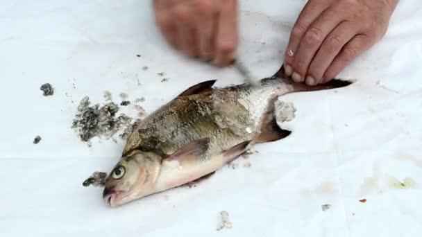 rychlost rybář ruku s nožem čisté CEJN ryby šupiny střeva