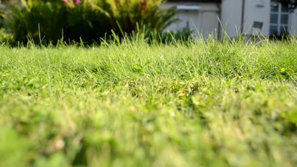 meadow grass closeup grass lawn cutter mower worker pass shadow
