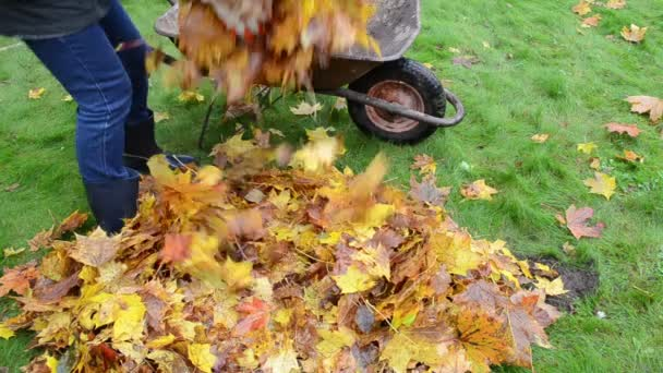 woman worker hand load barrow cart autumn leaf garden carry