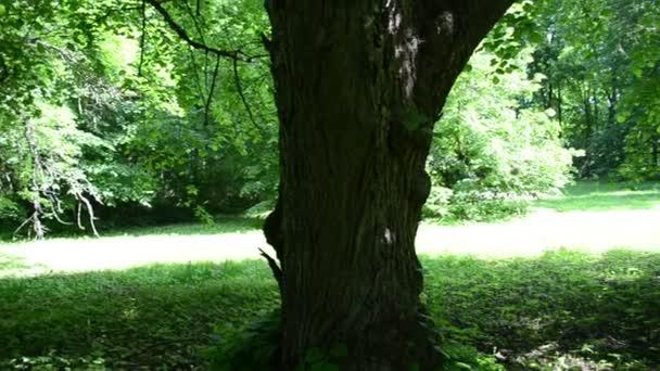 Blick auf den Park alte Linde Äste grün Blätter schön Sonnenlicht