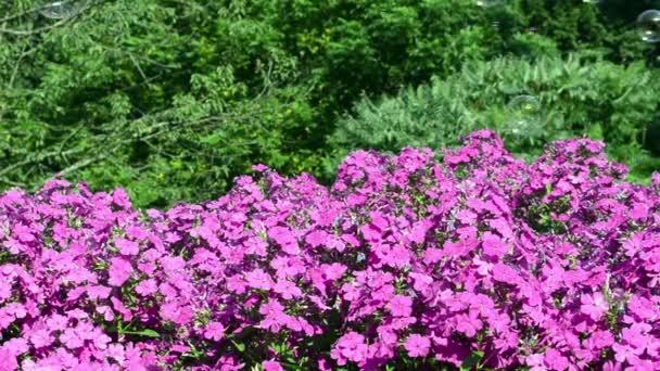 Seifenblasen fliegen rote Blumen Garten