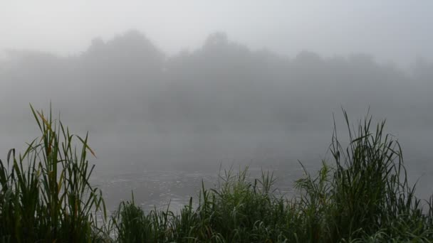 early morning river water flow misty fog shore green flora reeds