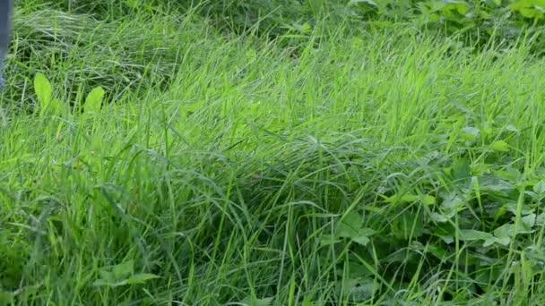 gardener rubber waterproof boots shoes walk dew wet meadow grass