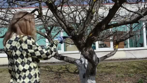 zahradníka žena ručně broušené švestkového ovoce stromu větev ruku viděl jaro