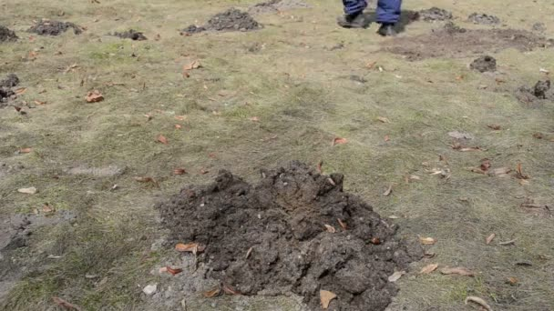 Gartenarbeiter mit Rechen korrigiert Maulwurfshügel
