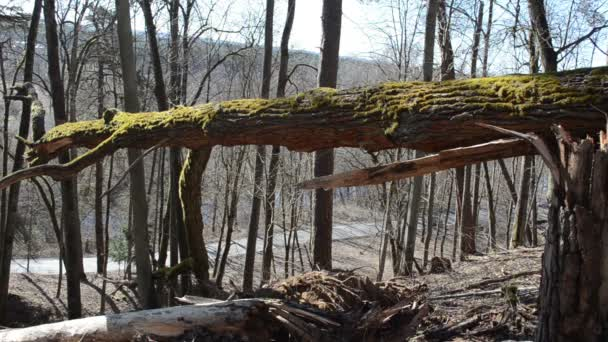 padlé mechem velký strom v lese po úzké silnici stroje