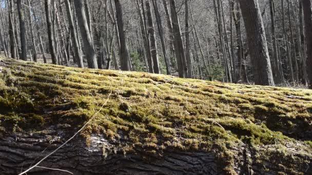 Tree trunk moss walk