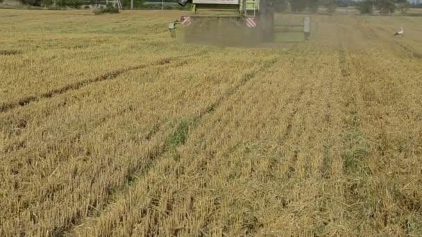 sláma pádu z kombinovat traktor sklizně pšeničné pole čápů