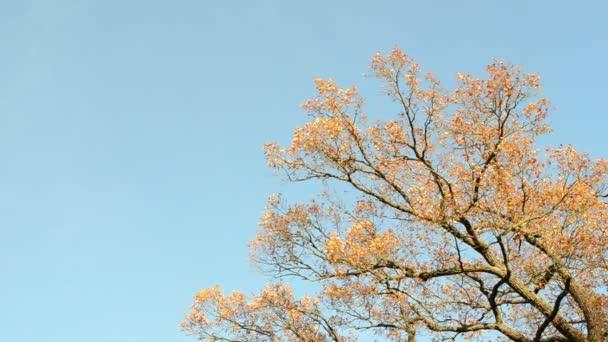 Dub větev podzim