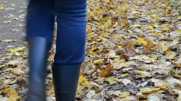 noha park podzimní listí