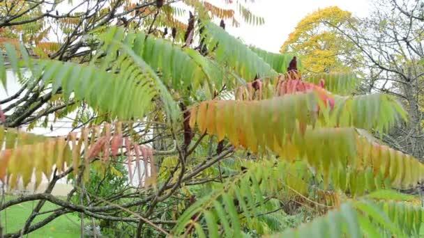 podzimní výzdoba listí
