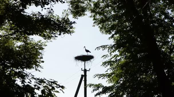 Čáp ptačí siluety