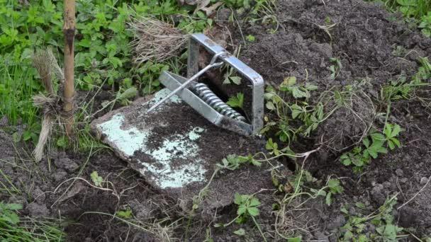 Maulwurfsfalle für Gartenarbeiter
